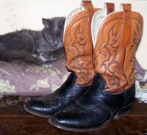 Henry With Boots - Unimpressed