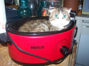 Trissie the cat, resting in the Nesco Roaster Oven & Slow Cooker
